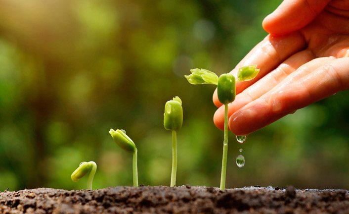 plantar-706x432